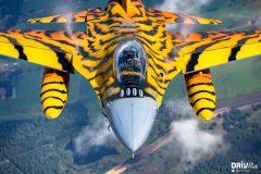 2016_Tiger_Bert-2